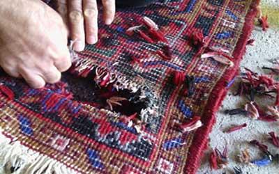 أدوات ترميم و تجديد سجاد المساجد, ترميم و تجديد سجاد المساجد, تلف السجاد فرش سجاده محراب نقش کاشان